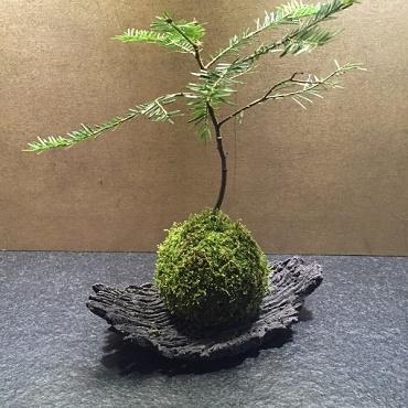 Atelier Atelier de création florale japonaise, kokédama - Paris 9è