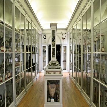 Atelier Musée d'histoire naturelle-21
