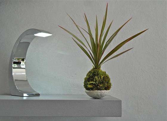 Atelier de création florale japonaise, kokédama - Paris 9è